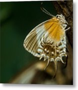 Exotic Butterfly On Tree Bark Metal Print