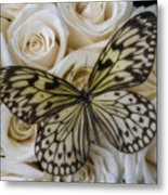 Exotic Butterfly On White Roses Metal Print