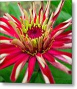 Exotic Flower Metal Print