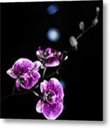 Exotic Orchid 6 V2 Metal Print