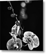 Exotic Orchid Bw Metal Print