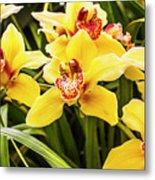 Exotic Orchids  Metal Print