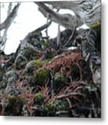 Exposed Roots II Metal Print