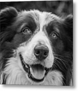Expression Of A Border Collie Metal Print