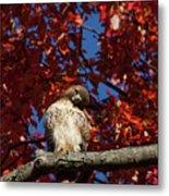 Expressive Hawk Metal Print