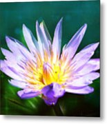 Exquisite Waterlily Metal Print