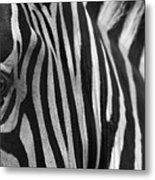 Extreme Close Up Of A Zebra Metal Print