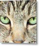 Extreme Close Up Tabby Cat Metal Print