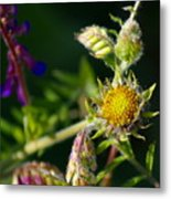 Eye Candy From The Garden Metal Print