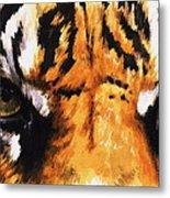 Sumatran Tiger Glare Metal Print