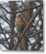 Eye-contact With The Rare - Orange Phase - House Finch Metal Print