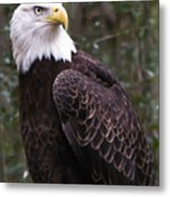 Eye Of The Eagle Metal Print
