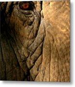 Eye Of The Elephant Metal Print