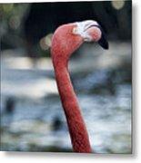 Eye Of The Flamingo Metal Print