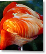 Eye Of The Flamingos Metal Print