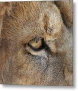 Eye Of The Lion #2 Metal Print