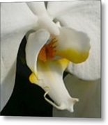 Eye Of The Orchid Metal Print