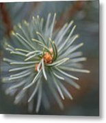 Eye Of The Pine Metal Print