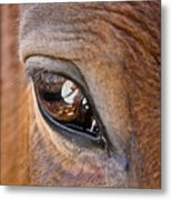 Eye See You Too Metal Print