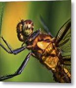 Eye To Eye Dragonfly Metal Print