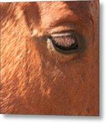 Eyelashes - Horse Close Up Metal Print