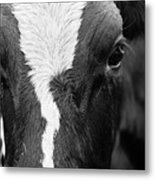 Eyes Of The Cow Metal Print