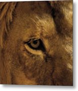 Eyes Of The Lion Color Metal Print