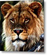 Eyes Of The Young King Metal Print