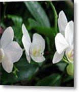 F11 Orchid Flowers Metal Print