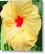 F12 Yellow Hibiscus Metal Print