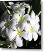 F13-plumeria Flowers Metal Print