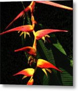 F19 Heliconia Flowers Hawaii Metal Print