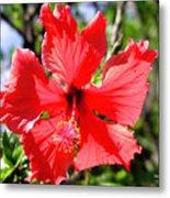 F20 Red Hibiscus Metal Print