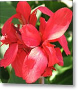 F22 Cannas Flower Metal Print