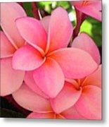 F23 Plumeria Frangipani Flowers Metal Print
