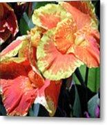 F24 Cannas Flower Metal Print