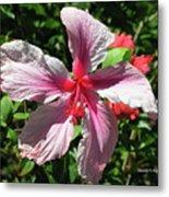 F5 Hibiscus Flower Hawaii Metal Print