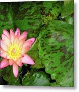 F6 Water Lily Metal Print