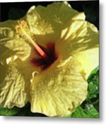 F9 Yellow Hibiscus Metal Print