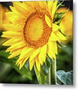 Just Another Pretty Face Metal Print