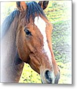 Face The Horse That Is Facing You   Metal Print