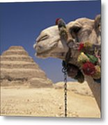 Face Of A Camel In Front Of A Pyramid Metal Print