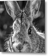 Face Of A Rabbit In Black And White Metal Print