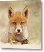 Face Of Innocence - Red Fox Kit Metal Print