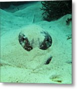 Face Off With Stingray Metal Print
