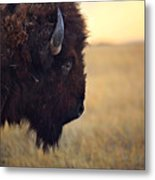 Face The Day Metal Print