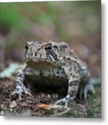 Face To Face With A Fowler Toad  Metal Print