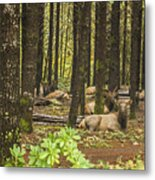 Faces In The Woods Metal Print