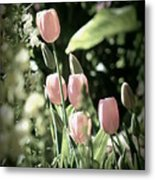Faded Tulips Metal Print