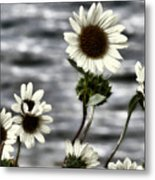 Fading Sunflowers Metal Print